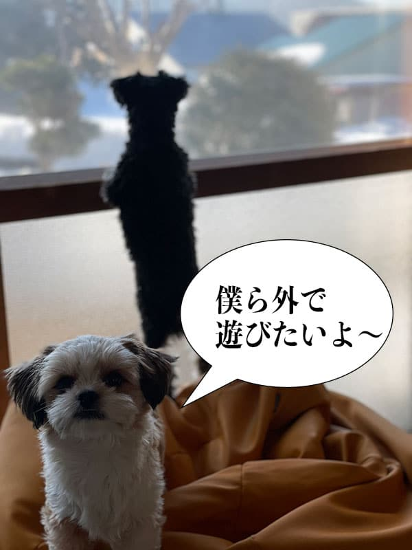 外に出たい犬たち